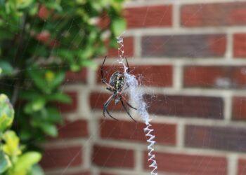 As aranhas podem parecer  assustadoras. Porém, a maioria delas que vive em nossas casas podem combater pragas e doenças. (Imagem de Manfred Peter Lederer por Pixabay)
