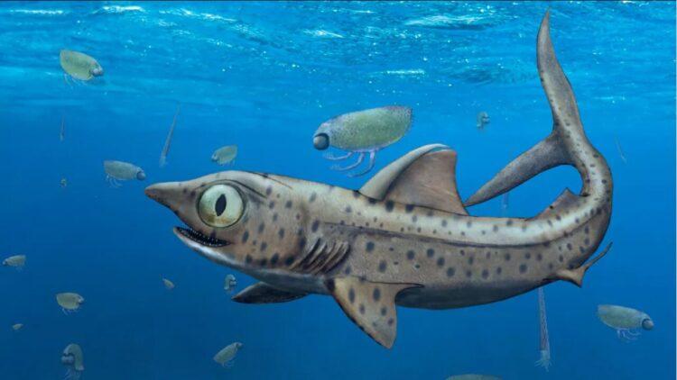 tubarão pré-histórico Ferromirum oukherbouch