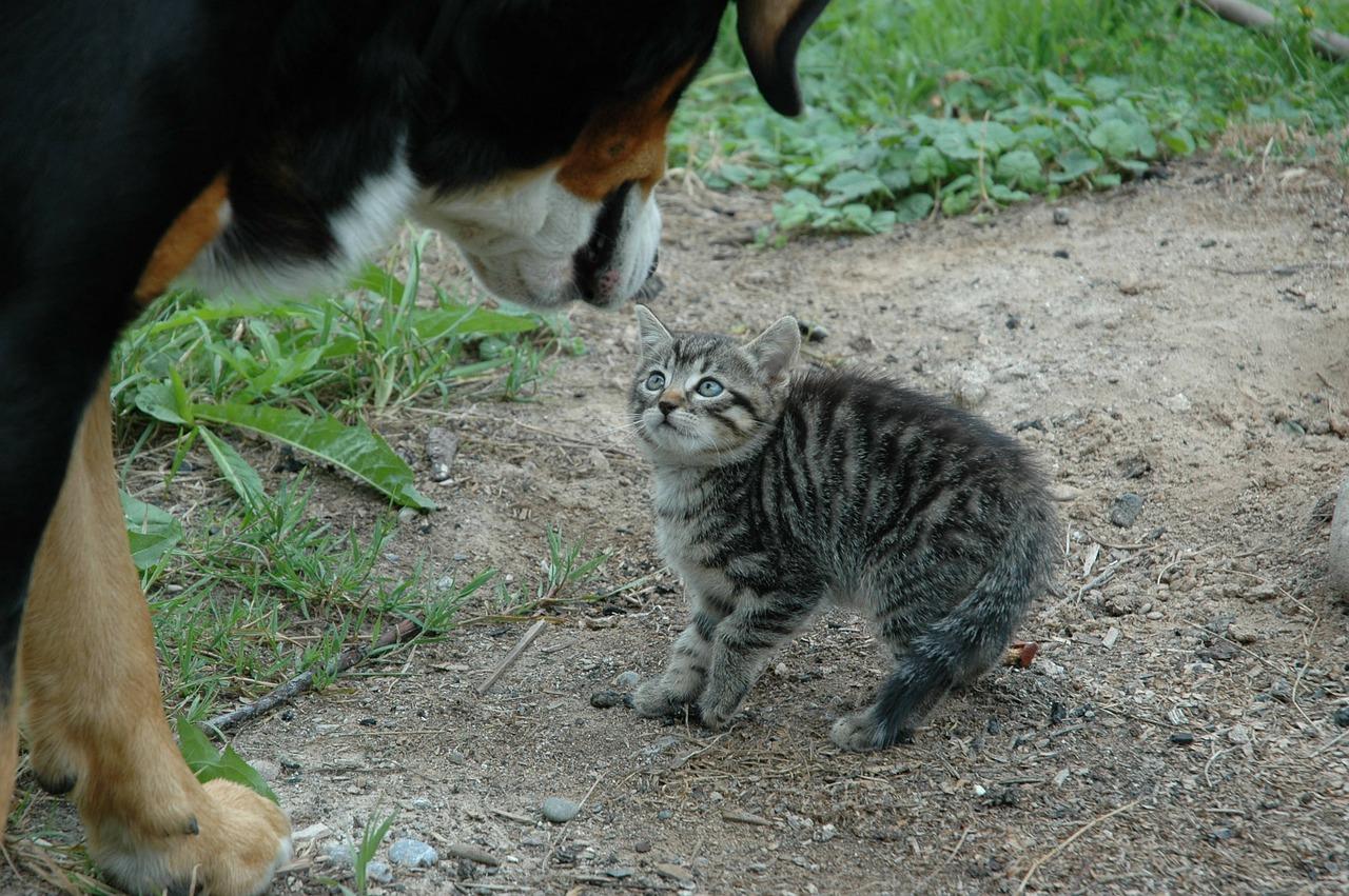 Por que cachorros não gostam de gatos?