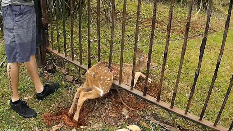 como as cercas afetam a vida selvagem