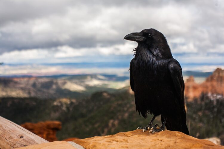 Estudos indicam que as aves podem ter uma inteligência muito mais semelhante à dos humanos do que se pensava. (Imagem de Free-Photos por Pixabay)