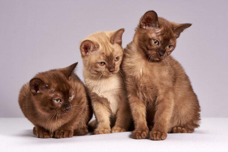 Cientistas japoneses demonstraram com sucesso que os gats provavelmente entendem quando seus donos os chamam pelos nomes. (Imagem de Алексей Боярских por Pixabay)