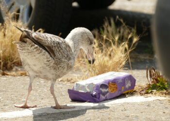 Um estudo literário de dezenas de artigos mostrou quais os tipos de plásticos mais mortais para as espécies marinhas. (Imagem de Eveline de Bruin por Pixabay)