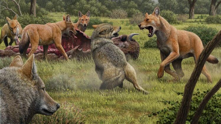 Lobo terrível