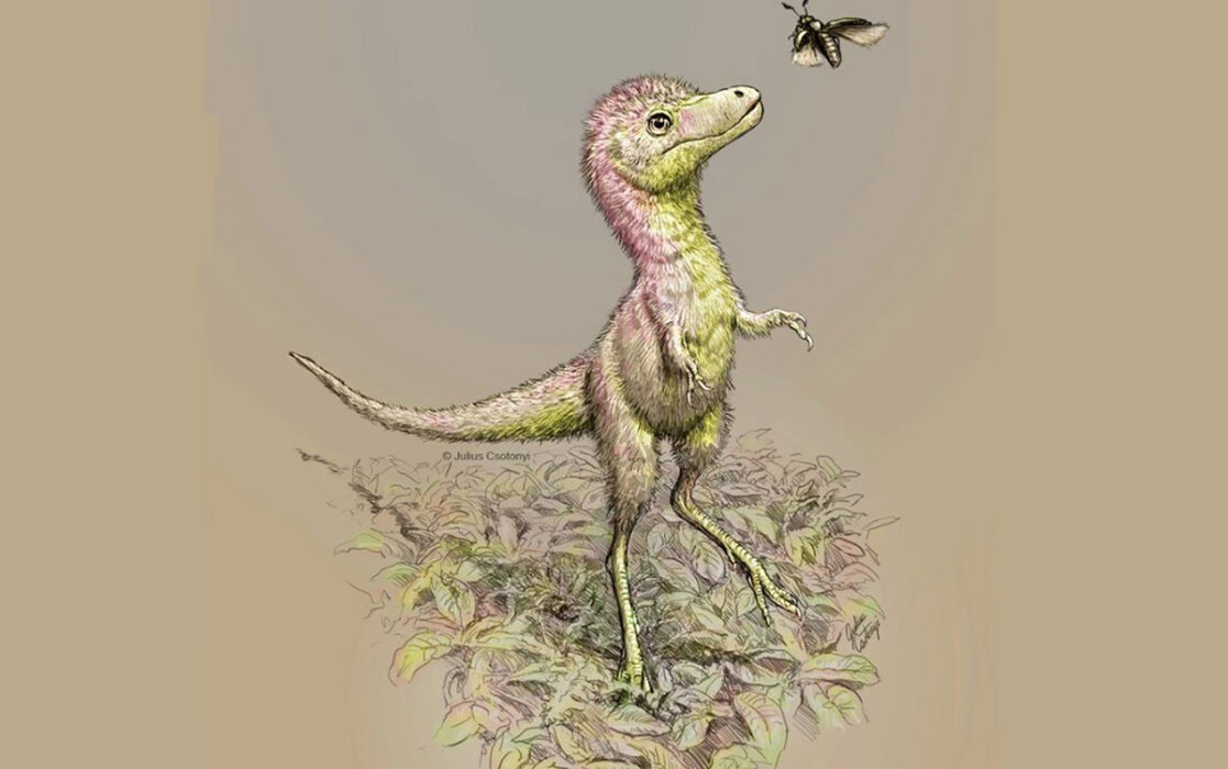 Tamanho de um bebê tiranossauro