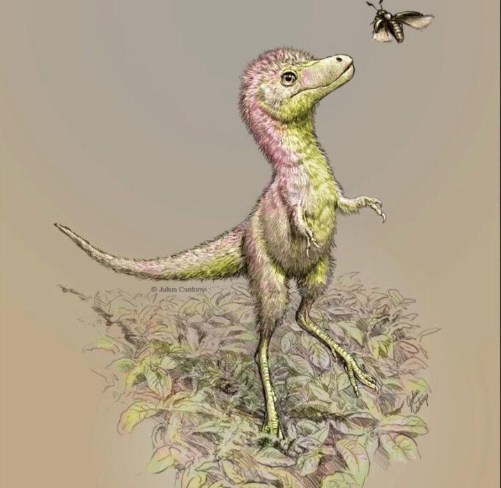 Tiranossauros nasciam com o tamanho de um Border Colie adulto