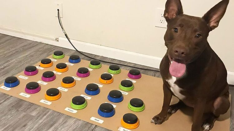 cachorro-aprende-a-falar