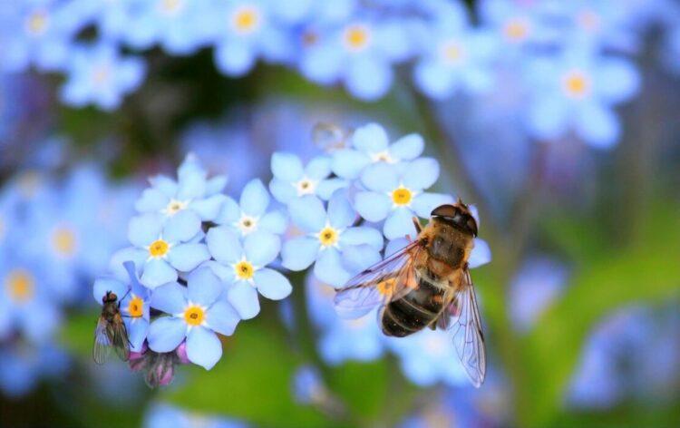 abelhas desapareceram