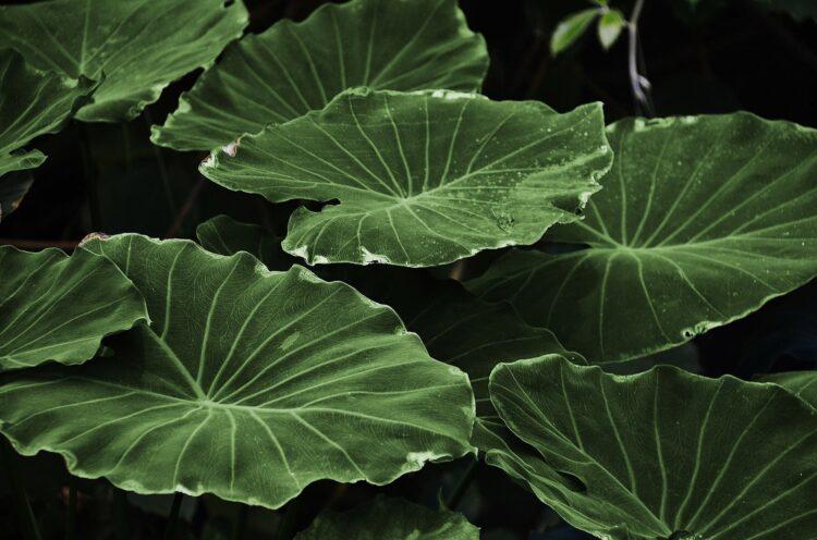A fotossíntese é o processo que permite que as plantas produzam energia a partir da luz do sol. E se pudéssemos fazer o mesmo? (Pixabay)