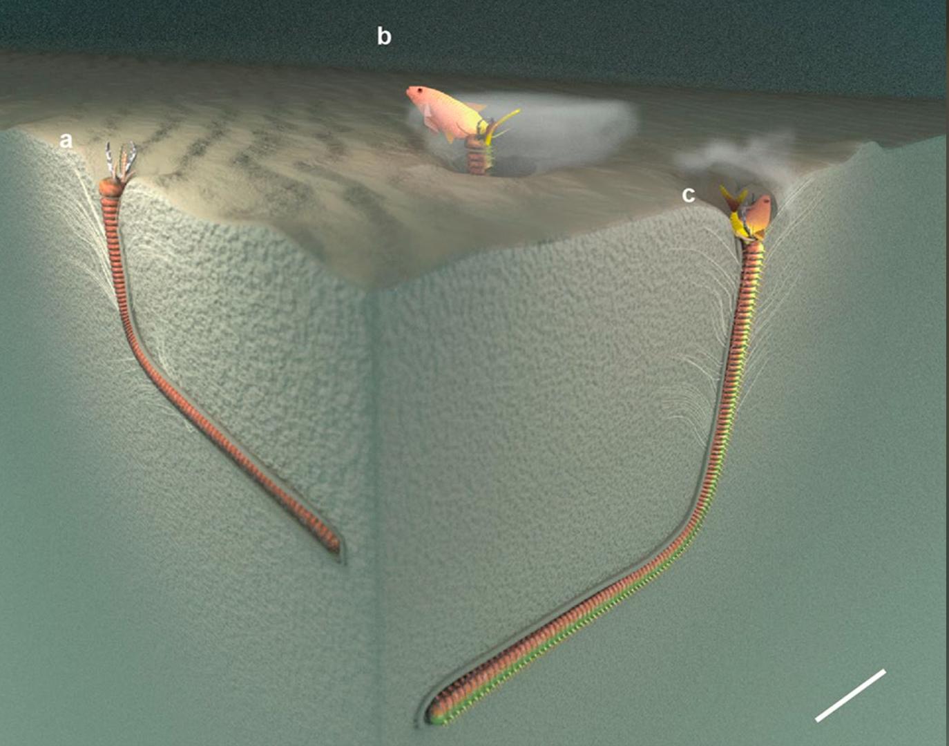 vermes gigantes