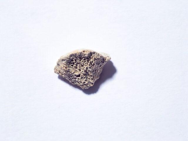 Fragmento de osso revela o cão mais antigo das Américas