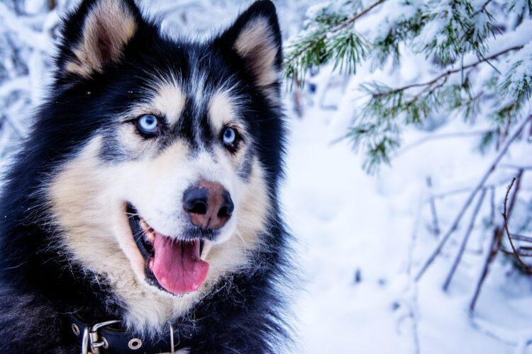 cão domesticado mais antigo das Américas