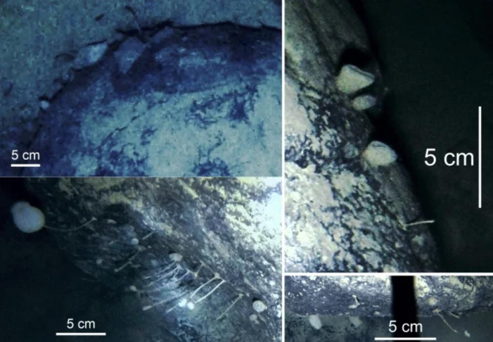 Um estudo relata a descoberta de criaturas misteriosas vivendo abaixo das plataformas de gelo da Antártica.
