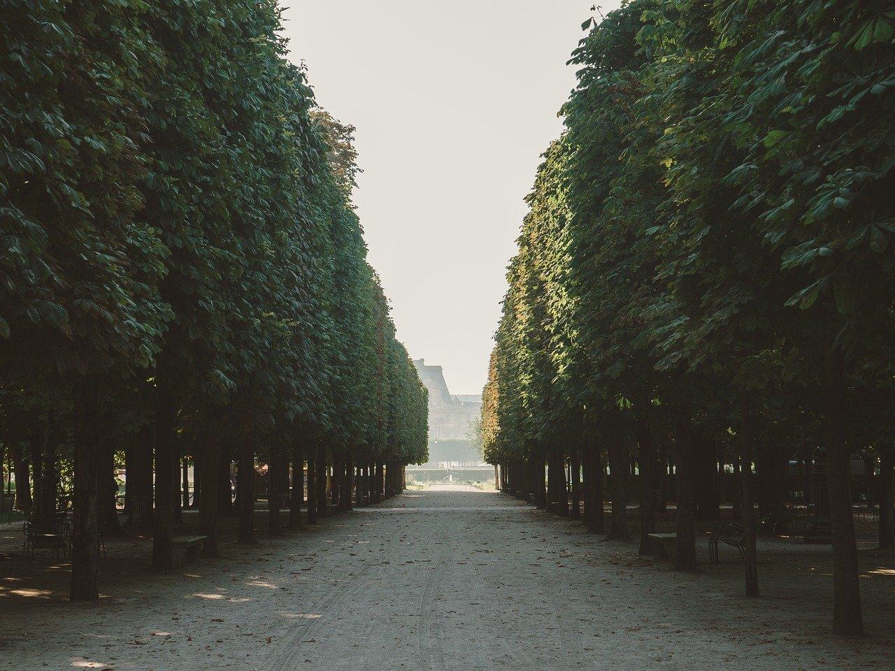 Árvore madura