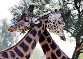 amor e sexo entre animais