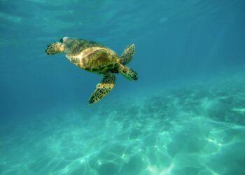 Animais marinhos curiosamente nadam em círculos e ninguém sabe exatamente o motivo. (Imagem de Pexels por Pixabay)