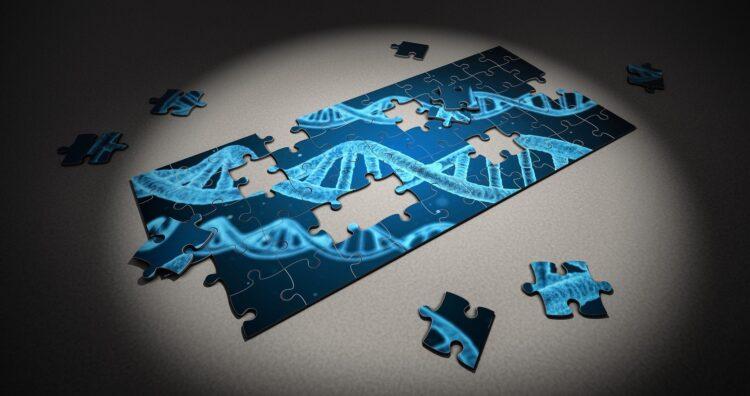 Entenda como as variações genéticas de uma espécie previnem a extinção. (Imagem de Arek Socha por Pixabay)
