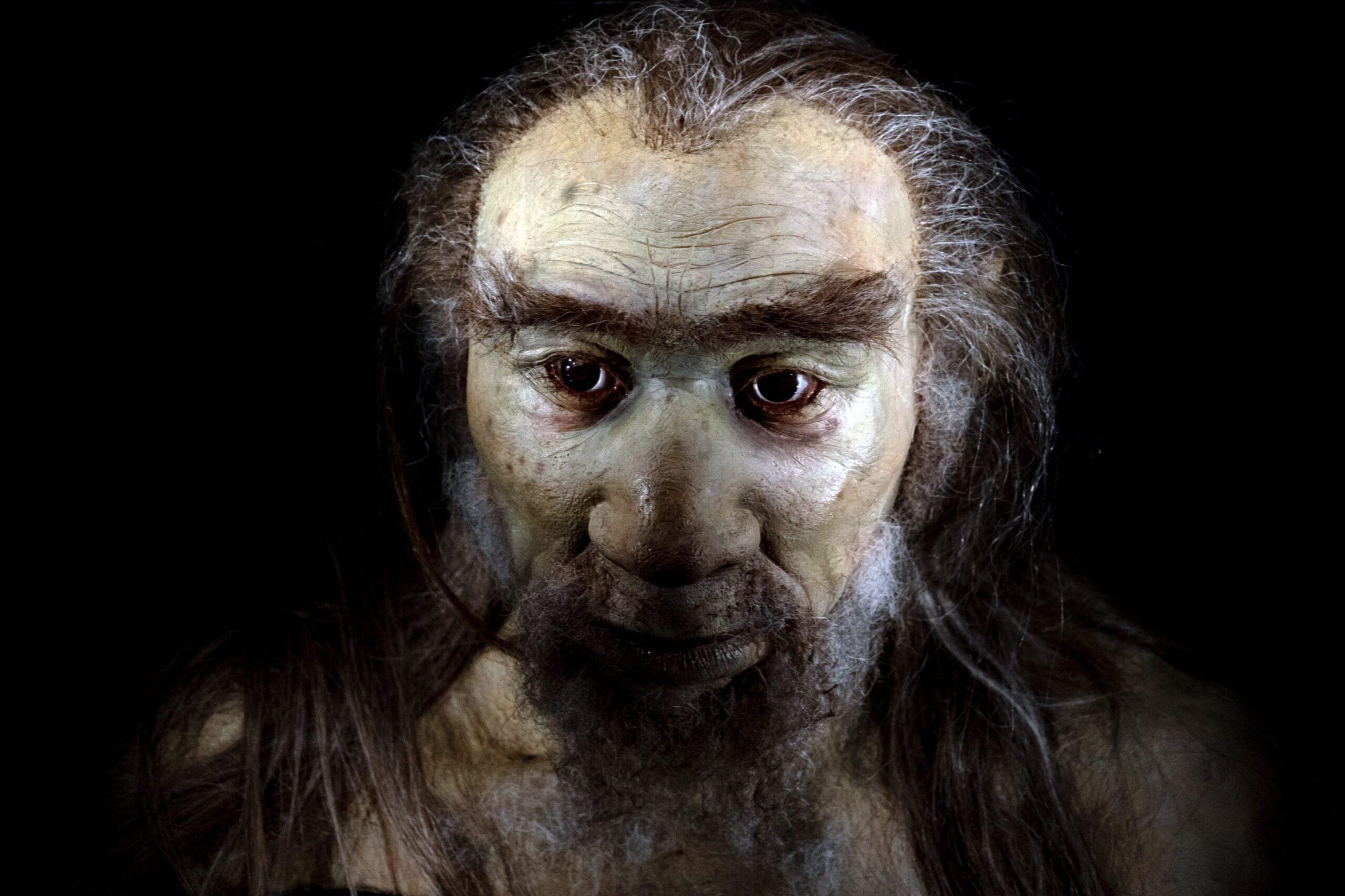 Ancestral humano com cauda é descoberto