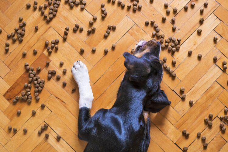 Estudos indicam que cães da Idade do Bronze tinham uma dieta baseada em cereais e ajudavam nas tarefas diárias da tribo. (Imagem de Mat Coulton por Pixabay)