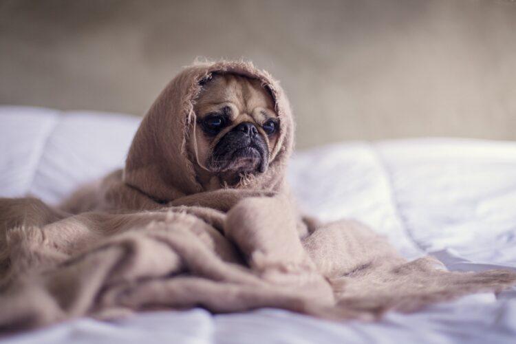 Estudos mostram que mesmo pensamentos podem causar ciúmes em cães. (Imagem de Free-Photos por Pixabay )