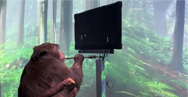 macaco com dispositivo neuralink