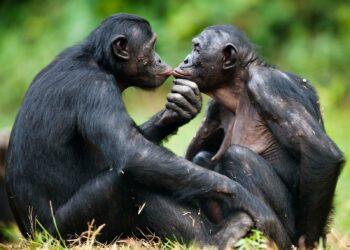 Animais realizam incesto sem se preocupar com isso