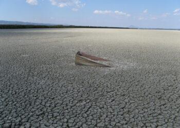Declínio causado pelo homem na biodiversidade requer milhões de anos de recuperação