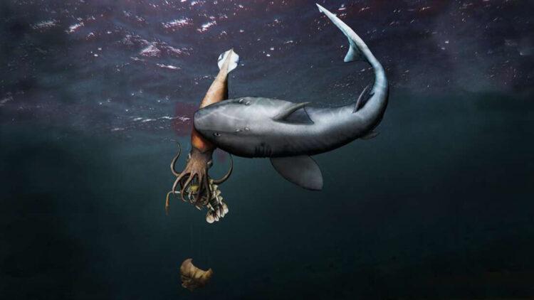 Fóssil revela tubarão predando lula que devorava