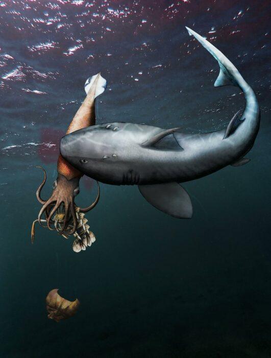 Fóssil revela tubarão predando lula que devorava crustáceo