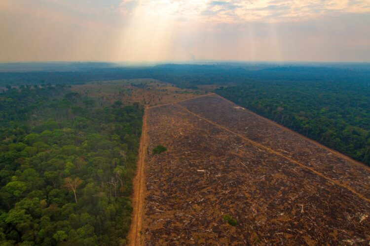 Área desmatada ilegalmente na Floresta Amazônica. Imagem: Marcio Isensee/Shutterstock