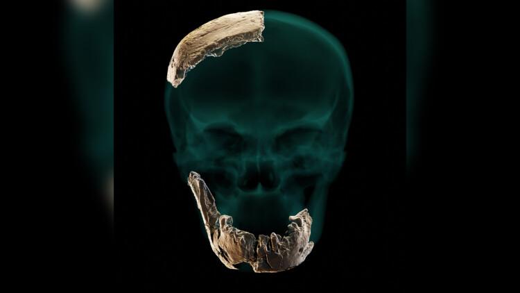Reconstrução do crânio do Homo Nesher Ramla. Imagem: Universidade de Tel Aviv.