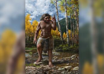 Uma ilustração de como seria o Homo longi. Imagem: Chuang Zhao