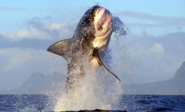 Imagem: Getty Images