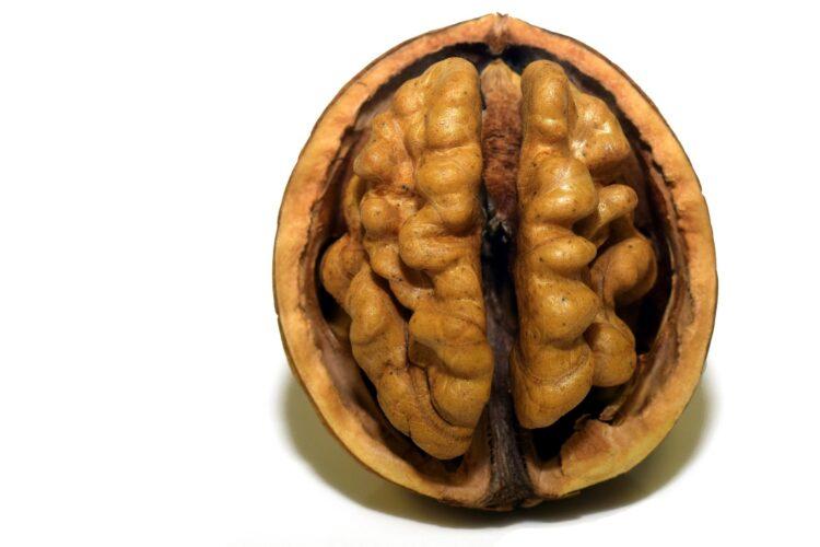 Esta pesquisa mostra que cérebros e testículos na verdade têm muito em comum. Imagem: Ulrike Leone/Pixabay