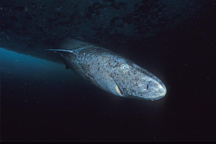 Imagem: Wikipedia Commons