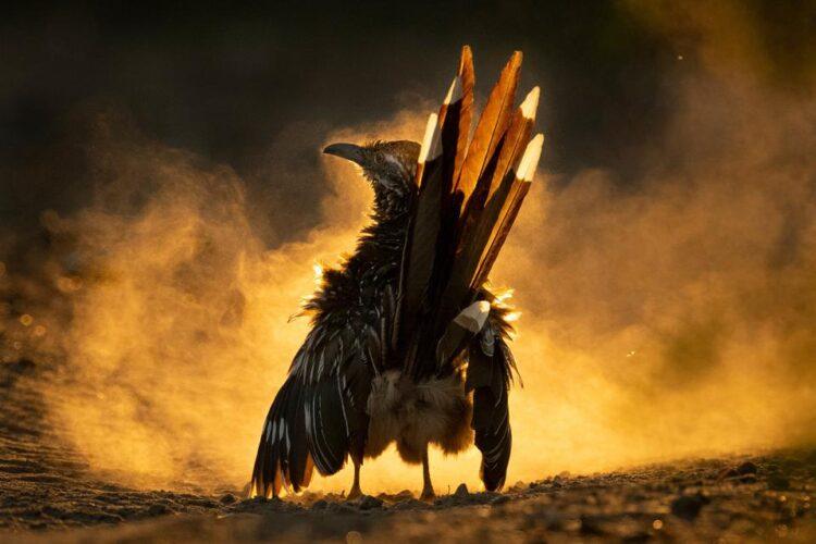 Imagem: CAROLINA FRASER - AUDUBON PHOTOGRAPHY AWARDS/2021