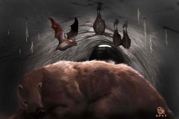 Pesquisadores encontraram fósseis deste morcego vampiro gigante dentro da toca de uma preguiça gigante de 100.000 anos. Imagem: Museo de Ciencias Naturales de Miramar