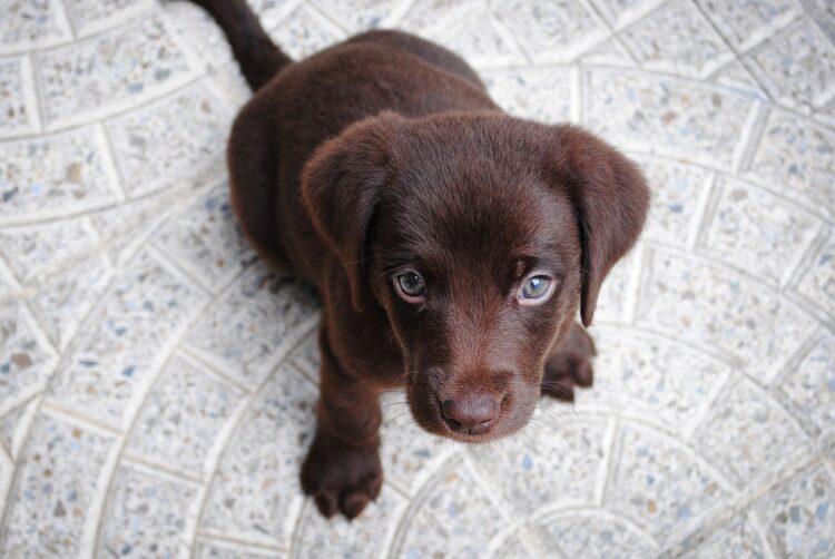 A genética dos cães pode envolver sua habilidade para identificar gestos humanos, de acordo com esta nova pesquisa. Imagem: Free-Photos/ Pixabay