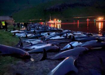 Imagem: Sea Shepherd Conservation Society