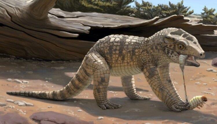 Fóssil de Crocodilo de Uberaba