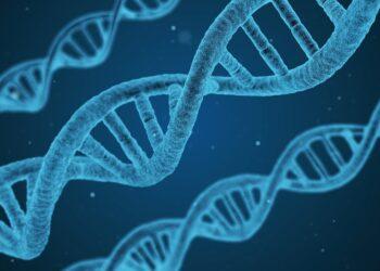 Inteligência artificial identifica novidades no genoma humano. Imagem por Qimono disponível em Pixabay.